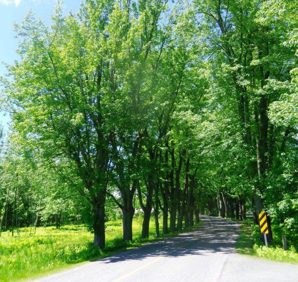 Un chemin parmis les arbres